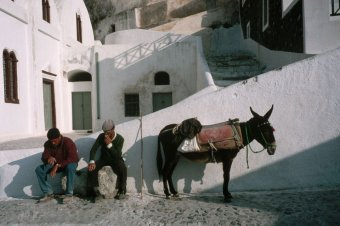 Men with Donkey in Santorini Town